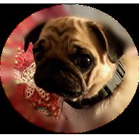 home-page-pug