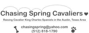 Contact information & Link to chasingspringcavaliers.com